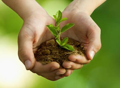 Fertilisation des arbres et arbustes