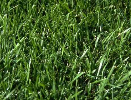 Expertise et bilan de santé de votre pelouse