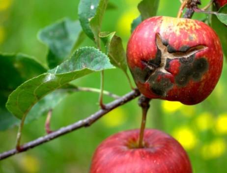 Contrôle des insectes et maladies des arbres/arbustes